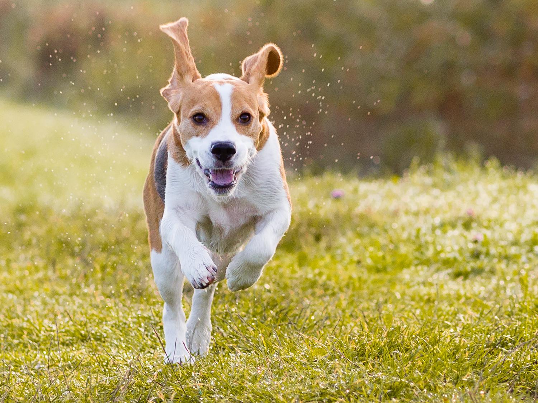 Haustiere sind ein beliebtes Motiv, gerade auch für Hobbyfotografen